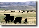 Idaho Farm Land 10 Acres Premiere Cattle Country