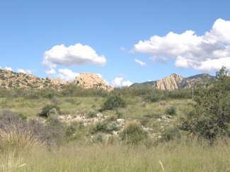Looking east in the direction or Cochise Stronghold in the National Forest.