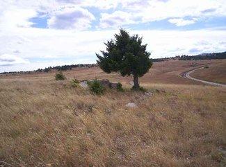 Pasture Area