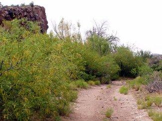 Jeep trail a South boundary