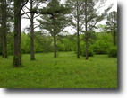 Tennessee Farm Land 6 Acres Creek Property near Knoxville, TN