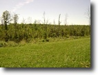 Tennessee Farm Land 84 Acres Located in Excellent Area in Bledsoe Co.
