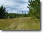 Michigan Hunting Land 10 Acres TBD Lillian Drive  MLS #1038072