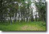 Wisconsin Waterfront 2 Acres Lake Petenwell-Waterfront-Wooded