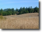 California Ranch Land 40 Acres Serenity Exemplified - Anderson Valley
