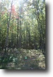 Wisconsin Waterfront 1 Acres Gorgeous, Fully Wooded Lake Access