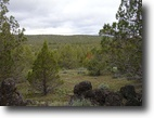 California Ranch Land 40 Acres 40 Ac Northern California Near Natl Forest