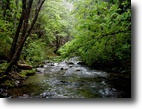 SOLD! 160 Survival Acres with Trout Stream