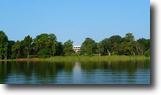 Florida Farm Land 312 Acres Orleans on Lake Eloise