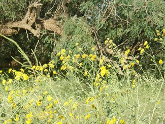 Wildflowers growing in a wash near the lot.