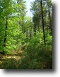 New York Farm Land 5 Acres Adirondack forest / Cabin Property