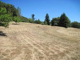Lovely High Meadows