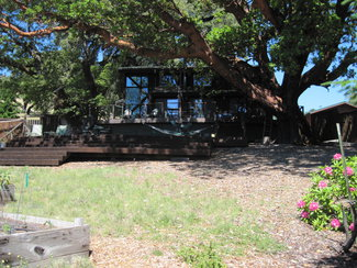 A quality home under a giant Madrone.
