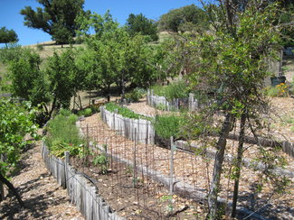 More garden with Fruit trees.