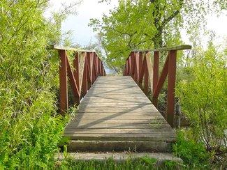 Bridge to the Marsh
