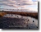Ontario Ranch Land 77 Acres Duck Hunting, Fishing, Horses-Lake Scugog