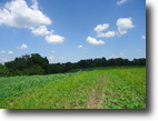 Kentucky Farm Land 164 Acres Excellent Cattle or Horse farm with River