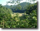 West Virginia Hunting Land 131 Acres 1 Schoolhouse Road  MLS 102091