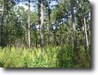 Florida Farm Land 1 Acres Mays Farmstead