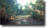 369 Acres of Timberland in Clay County