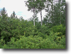 Minnesota Farm Land 20 Acres North Woods Land Bordering State Forest