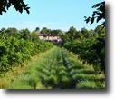 Florida Farm Land 36 Acres Vero 98th Avenue Grove