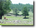 Colorado Ranch Land 71 Acres Get Off line in the Rockies