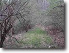 West Virginia Hunting Land 45 Acres 1450 Bee Creek Road    MLS 102271