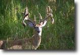 Michigan Hunting Land 775 Acres 5807 Branham Road  MLS 1072006
