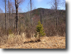 592 Acres in Burke County NC