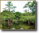 Florida Hunting Land 175 Acres Second Magnitude Spring on Suwannee River
