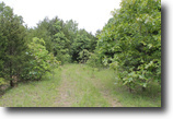 Missouri Farm Land 7 Acres Cedar Ridge Ranch Missouri Land Terms