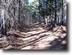 65 Acres of Timberland in Oktibbeha County