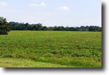 Georgia Farm Land 126 Acres Hilton's Folly