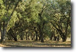 Florida Hunting Land 830 Acres Longpine Plantation's Florida Line