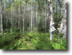 Michigan Hunting Land 260 Acres TBD Wests Rd, MLS# 1077669