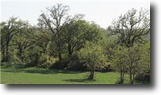 Texas Ranch Land 391 Acres 00 Fm 920