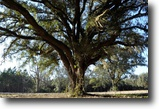 Florida Farm Land 696 Acres Suwannee River Farm