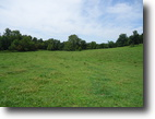 40 Acre Farm In Metcalfe County