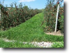 New York Land 154 Acres Apple Orchard in the Finger Lakes!