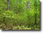Washburn County-80 acres-Trego