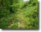 West Virginia Farm Land 42 Acres 0 Route 16 Chloe  MLS 102560