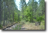 Florida Hunting Land 319 Acres Alachua County Hunting Tract