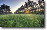 Florida Land 2 Acres Jumpie Run Plantation