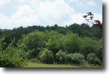 21.174 Acre Wooded Tract