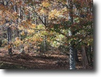 4.76 Acres ~ Wooded Tract