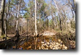 Florida Hunting Land 44 Acres The Slade Tract
