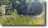 New York Hunting Land 5 Acres New York Land for Sale with Pond Camden NY