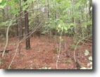 5.60 Acres Deer Path Lane
