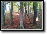 Ohio Hunting Land 5 Acres Pickens Cabin